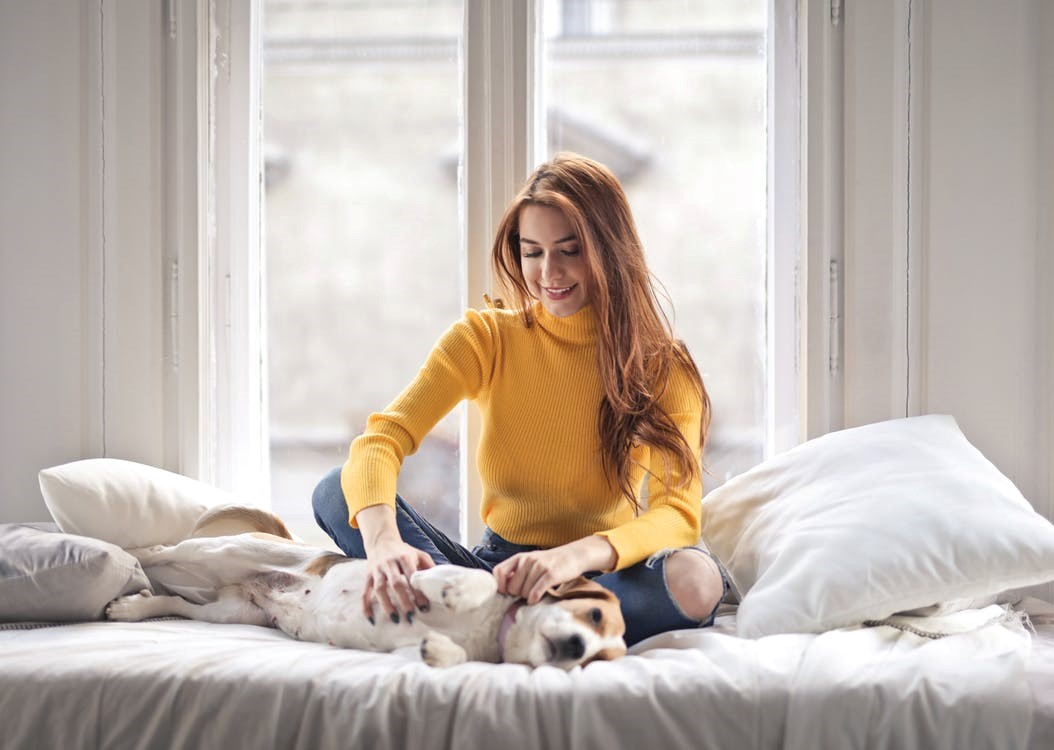 red-haired woman in yellow sweater petting a hound on a white bed in front of a window